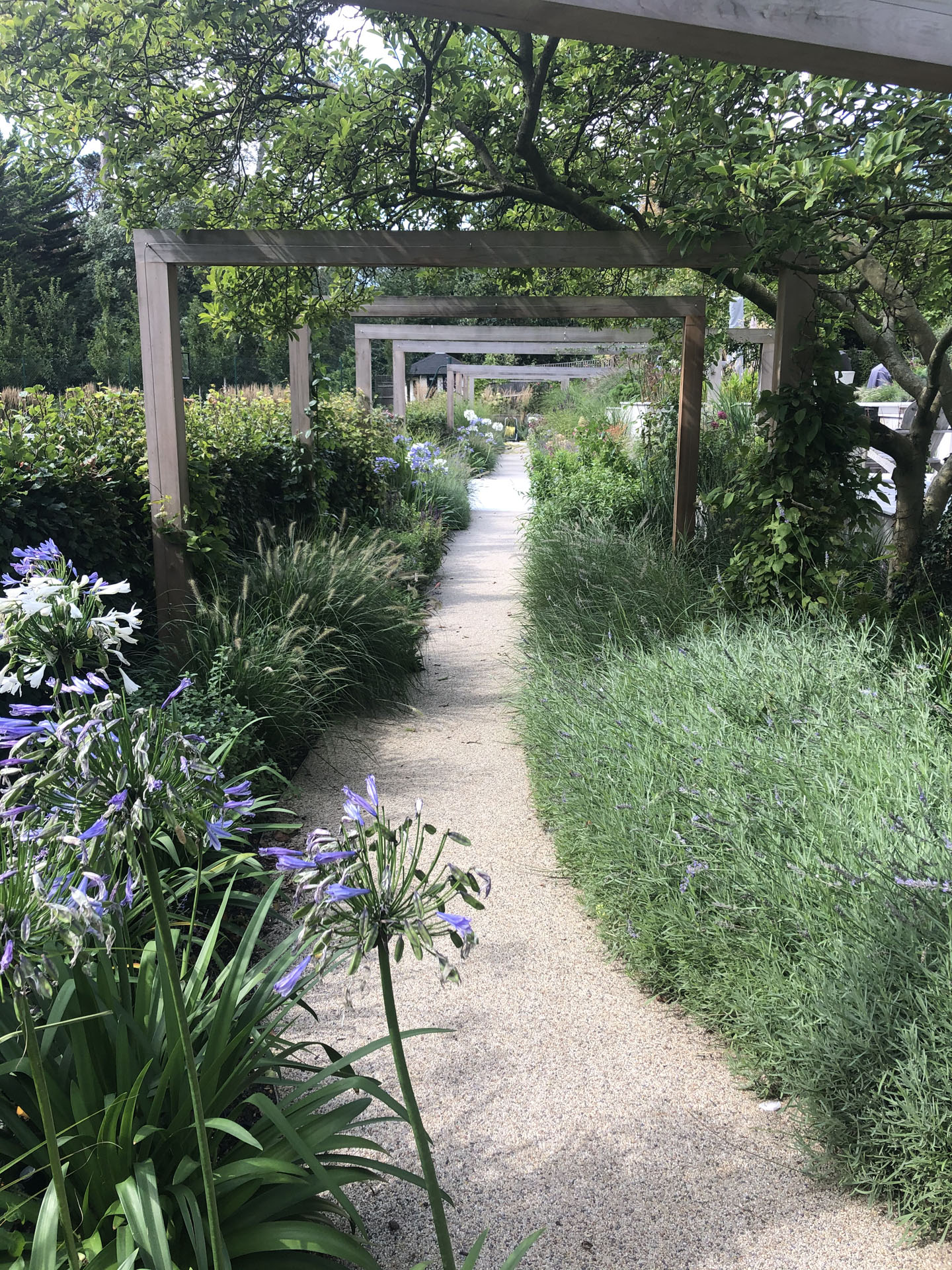 Lavender Lined Pathway, London