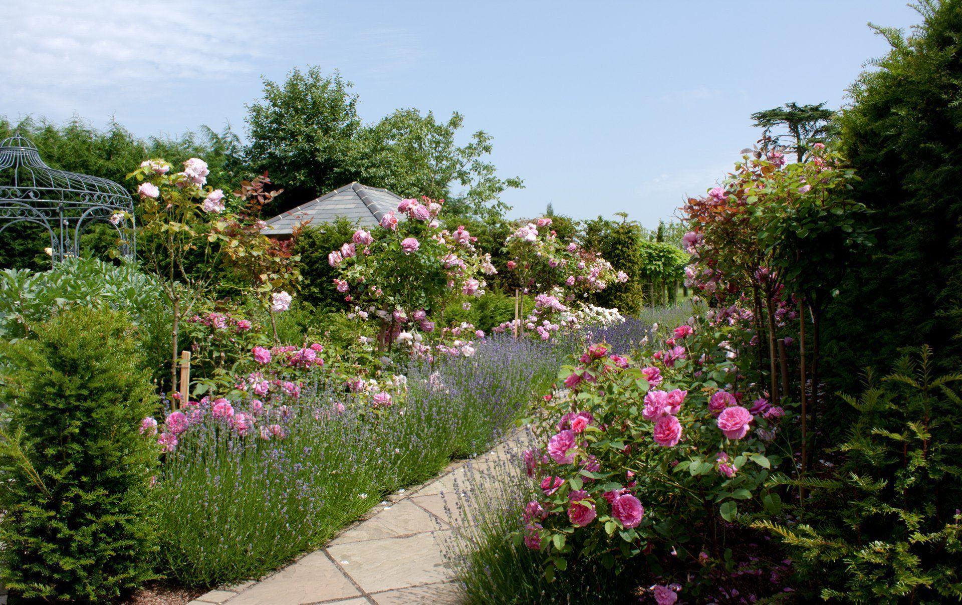 Rose & Lavender Garden, Suffolk