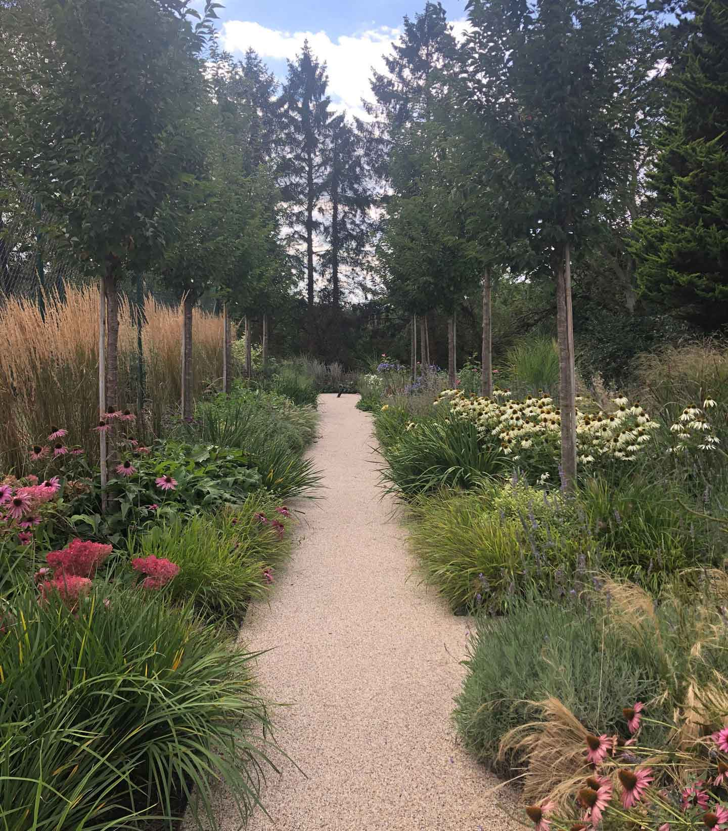 Tree lined Path with tall planting